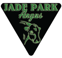 Jade Park Angus - Angus Bulls for sale